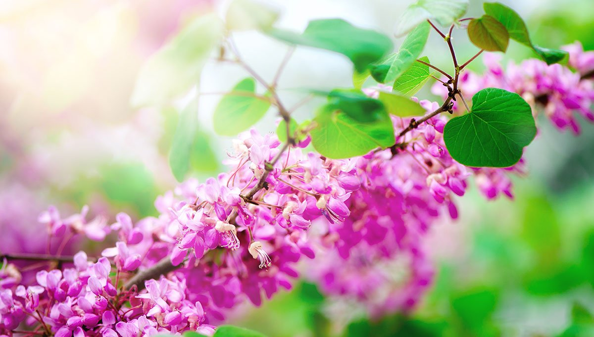 Native Plants Recommended for NY, CT & NJ Gardens & Landscapes