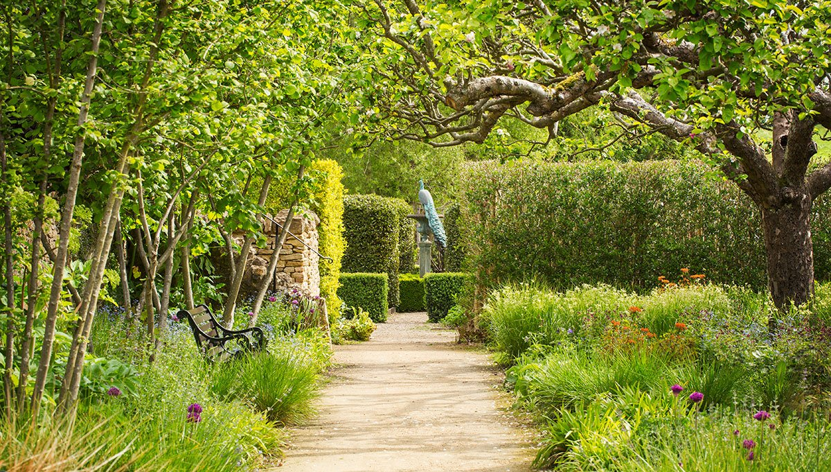 The Rosedale Plantsman's Recommended Trees and Shrubs for Privacy Screening